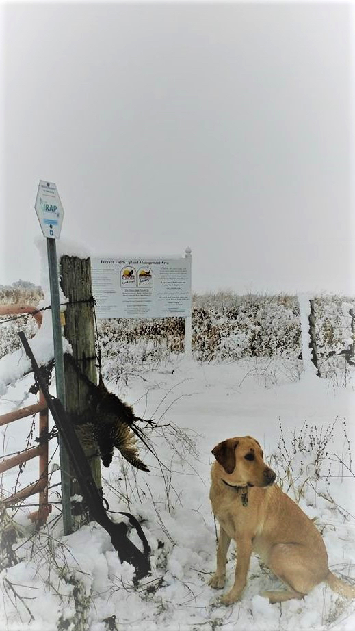 A hunting dog stands next to a fence post with harvested pheasants hanging from the fence. A snowing prairie is in the background.