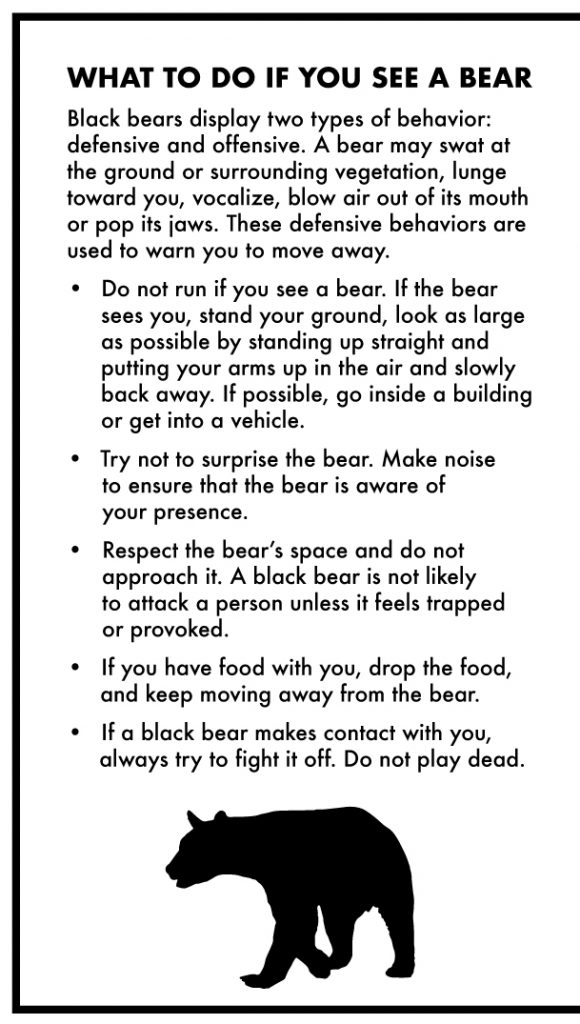 Some text indicating what to do if you see a bear. At the bottom of the text is a black bear silhouette.