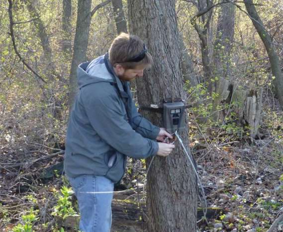 A biologist installing a trail cam around a tree in a woodland.