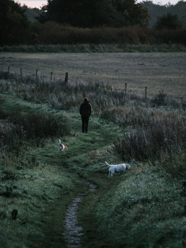 A person walking in a field with two dogs trailing behind without a lease.