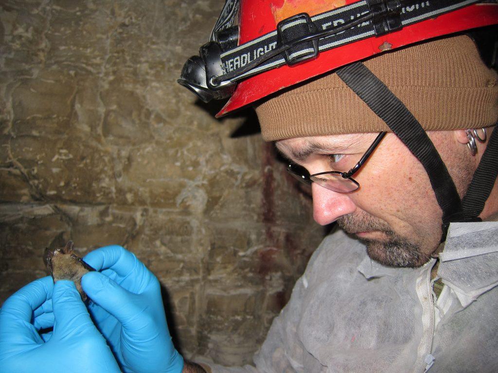 A scientist examines a bat.
