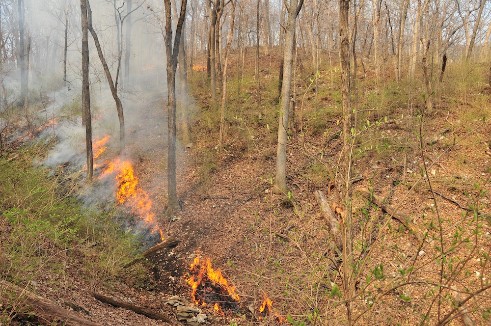 A line of fire on the side of a hill in a woodland is one view of prescribed burn.