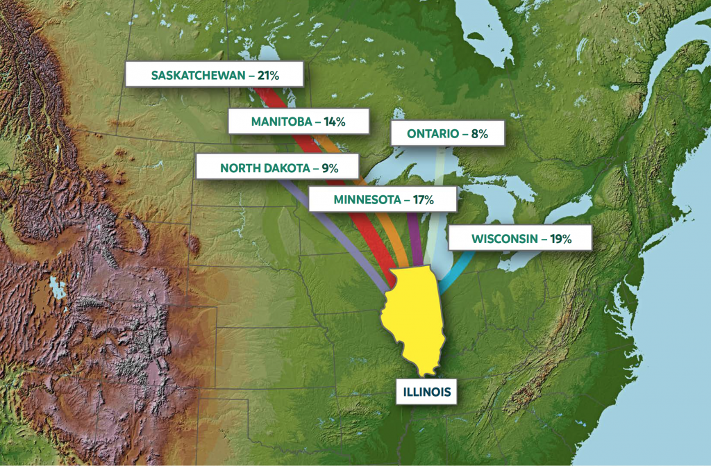 A map illustrating band recovery data for waterfowl harvested in Illinois. 21% of the birds were banded in  Saskatchewan, 14% of the birds were banded in Manitoba, 8% of the birds were banded in Ontario, 9% of the birds were banded in North Dakota, 17% of the birds were banded in Minnesota, and 19% of the birds were banded in Wisconsin.