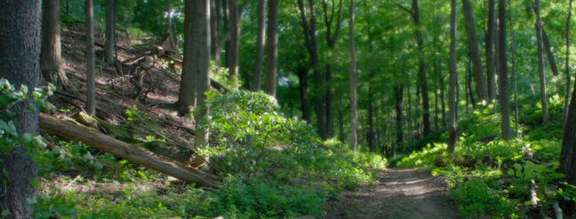 Hiking Trails - Niagara Glen Nature Centre