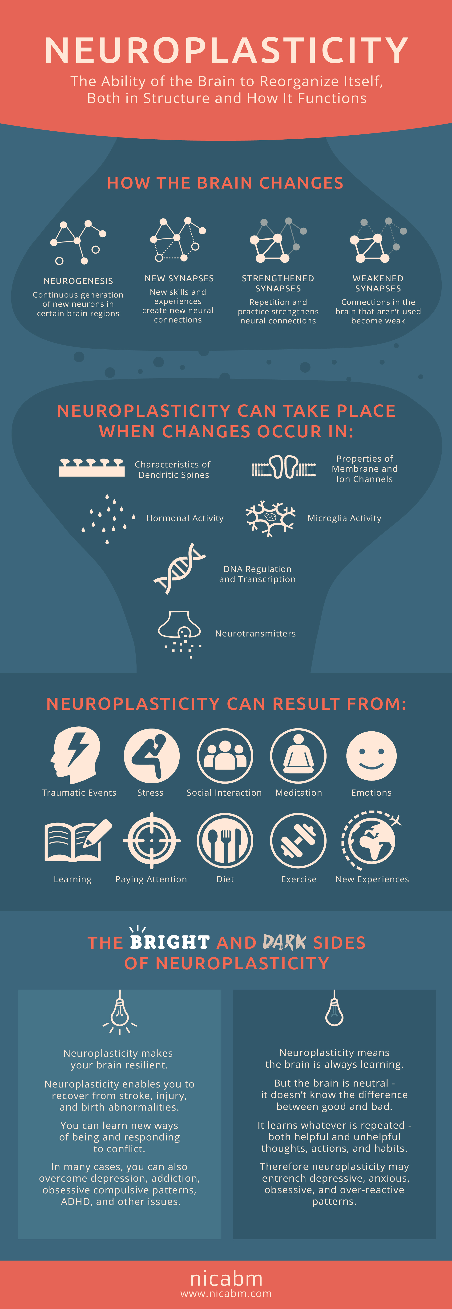 How Does Neuroplasticity Work? [Infographic] - NICABM