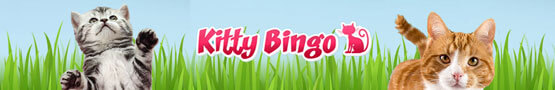 There's a Website for Cat and Bingo Lovers preview image
