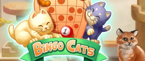 Bingo Cats - The more cards you play, the higher the chances of winning.