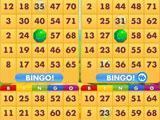 Bingo Kingdom playing with four cards