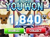 Cats vs Dogs Slots Big Win