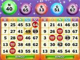 Bingo Nights on Wingo Bingo!