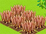 Growing Crops in Horse Farm