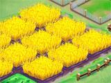 Farm Business Wheat Fields