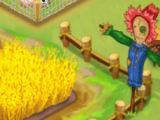 Farm Store Manage a Farm