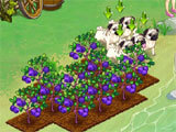Dreamland Farm: Growing Crops