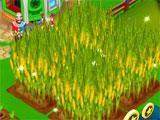 My Free Circus: Corn ready for harvest