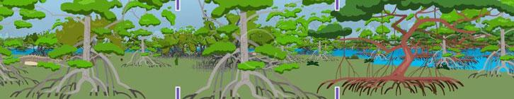 Educational Games About Nature and the Environment preview image