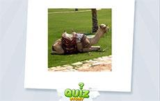 Animal Quiz Story