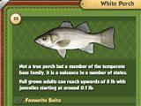 Fishing World Fish Record