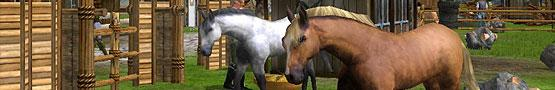 Gry Konne Online - The Majestic Creatures in Horses
