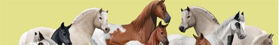 Horse Games Online - Why Horse Breeding Games are Amazing