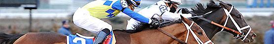 Gry Konne Online - Handicaps in Horse Racing