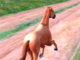 Horse Run gameplay