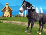 Horse Paradise: At the farm
