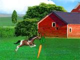 Horse Race Riding Agility: Collecting carrots