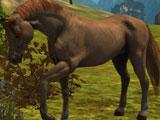 Gameplay tutorial in Ultimate Horse Simulator