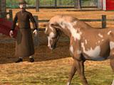 Ultimate Horse Simulator: Questing
