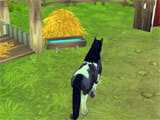 My Horse Care: Game Play