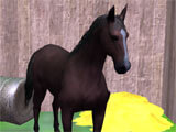 Horse Care in HorseLand Resort