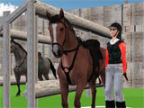 Horse Jumping Show 3D getting ready