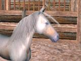 Your Stable in A Virtual Horse