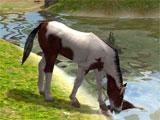 Virtual Horse Ranch