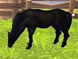 Horse Haven Adventure 3D meeting another horse