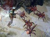 Gameplay for Path of Exile