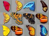 Kyodai Papillon