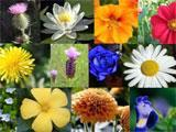 Flower Level in Mosaic Medley
