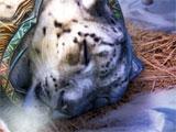 Injured Cat in Fierce Tales: Feline Sight