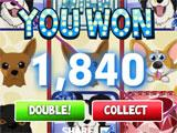 Cats vs Dogs Slots Big Win