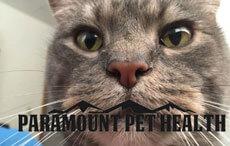 Paramount Pet Health