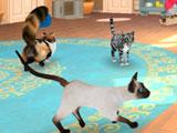 Cat Hotel VR: Own up to 7 different breeds