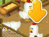 Raise chickens on Line Brown Farm