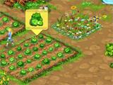 cabbages in Big Farm