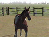 Aaron Ranch World interacting with a horse