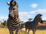 Zebras in Planet Zoo