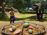 Planet Zoo: Feeding the animals