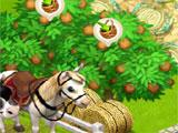 Horses in Family Barn