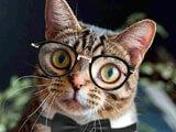 Word Insight Kitten